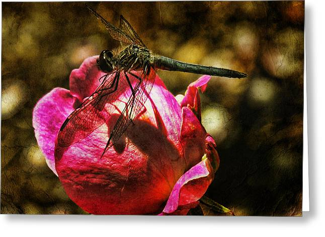 Dragonflies Mixed Media Greeting Cards - Dragonfly Brunch Greeting Card by Bonnie Bruno