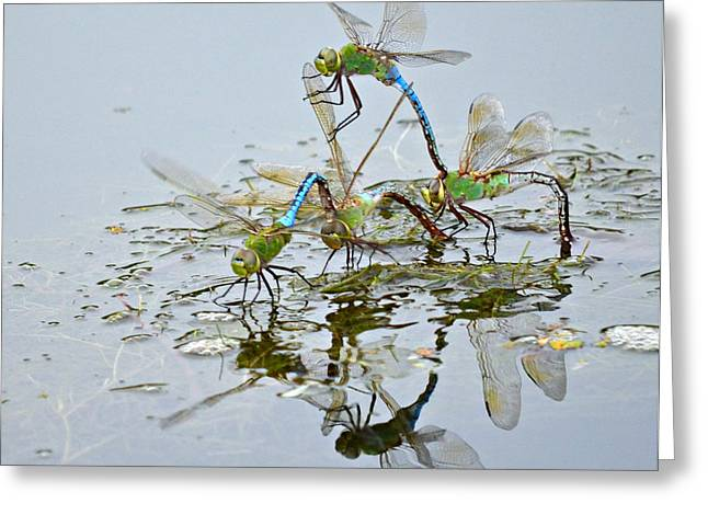 Green Darner Dragonflies Greeting Cards - Dragonfly Cheerleading Squad Greeting Card by Fraida Gutovich