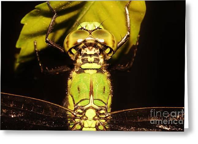 Dragonfly Closeup Greeting Card by Lynda Dawson-Youngclaus