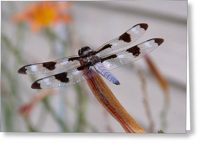 Macro Dragonfly Picture Greeting Cards - Dragonfly Greeting Card by Dave Dresser