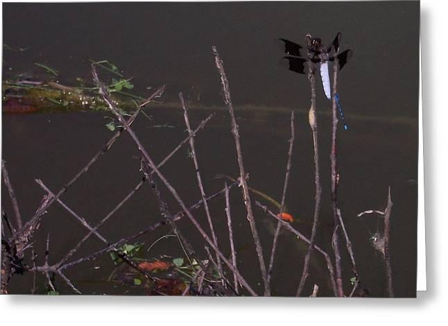 Anna Villarreal Garbis Greeting Cards - Dragonfly Duo II Greeting Card by Anna Villarreal Garbis