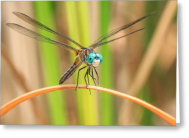 Dragonflies Greeting Cards - Dragonfly Greeting Card by Everet Regal