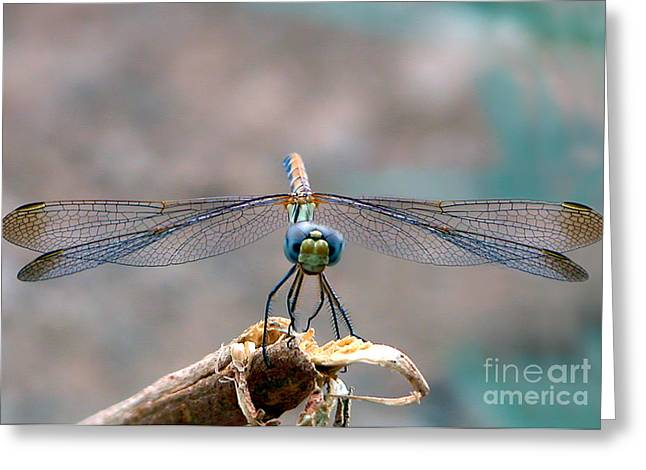 Giclée Fine Art Greeting Cards - Dragonfly Headshot Greeting Card by Graham Taylor