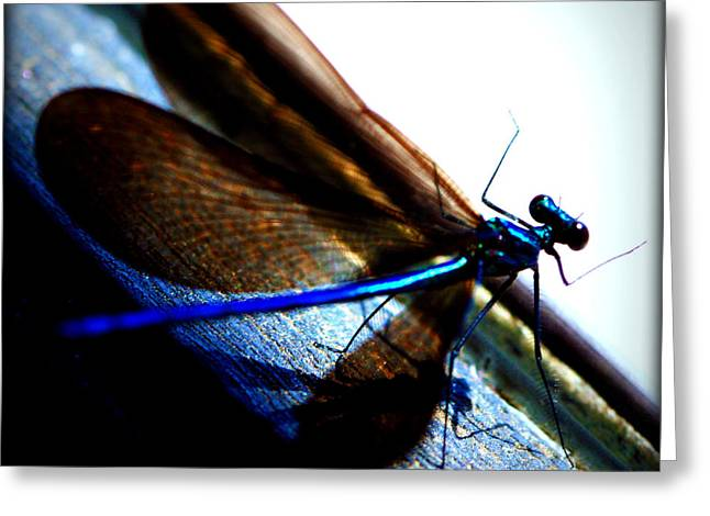 Dragon Flies Photographs Greeting Cards - DragonFly II Greeting Card by Susie Weaver