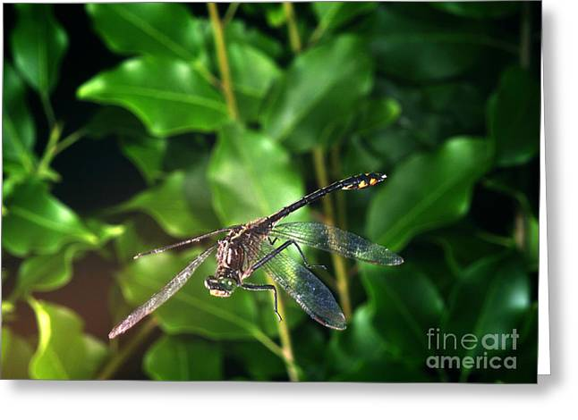Flash Photography Greeting Cards - Dragonfly In Flight Greeting Card by Ted Kinsman