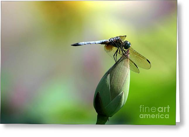 Dragon Flies Photographs Greeting Cards - Dragonfly in Wonderland Greeting Card by Sabrina L Ryan