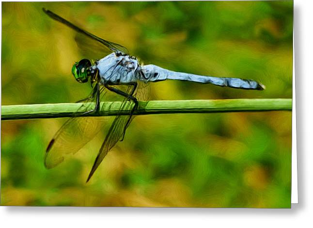 Dragonflies Greeting Cards - Dragonfly Greeting Card by Jack Zulli