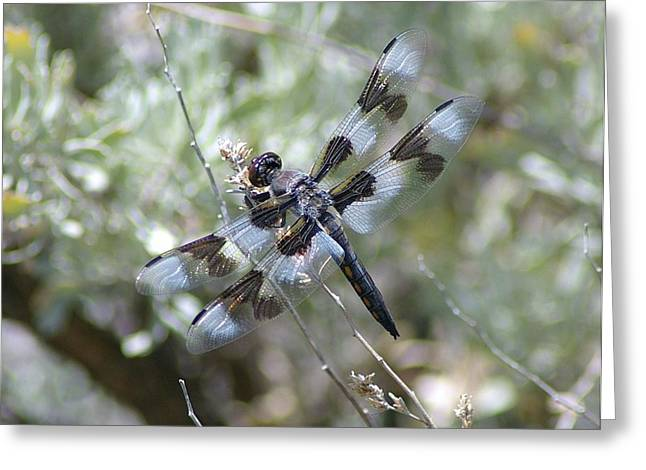 Flying Insects Greeting Cards - Dragonfly  Greeting Card by Jeff  Swan