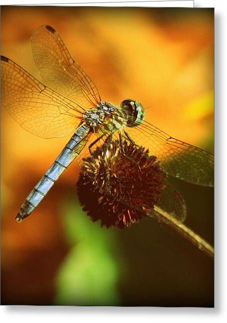 Dragonfly On A Dried Up Flower Greeting Card by Tam Graff