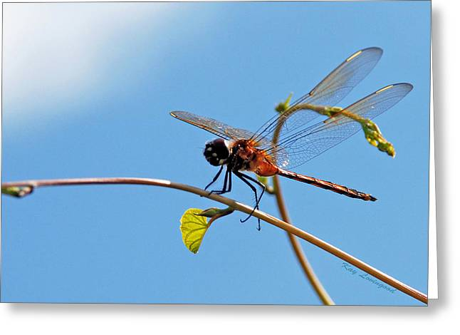 Kay Lovingood Greeting Cards - Dragonfly on a Vine Greeting Card by Kay Lovingood