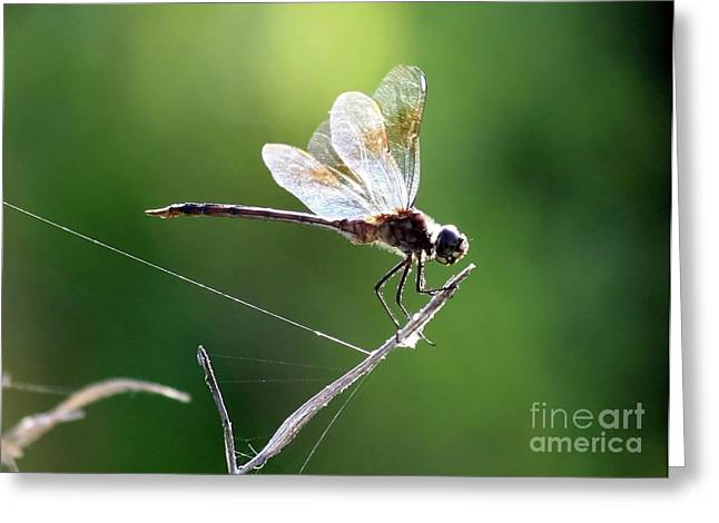 Flying Spider Greeting Cards - Dragonfly Sunshine Greeting Card by Carol Groenen