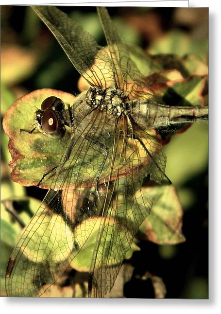 Earthy. Greens Greeting Cards - Dragonfly Wingspan Greeting Card by Chris Berry