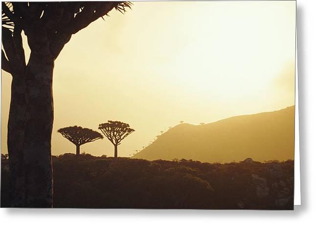 Pinnacle Peak Greeting Cards - Dragons Blood Trees Greeting Card by Diccon Alexander
