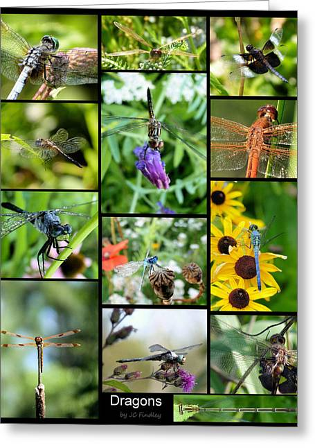 Damsel Fly Greeting Cards - Dragons Greeting Card by JC Findley