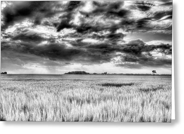 Delmarva Greeting Cards - Drama in DelMarVa BW Greeting Card by JC Findley