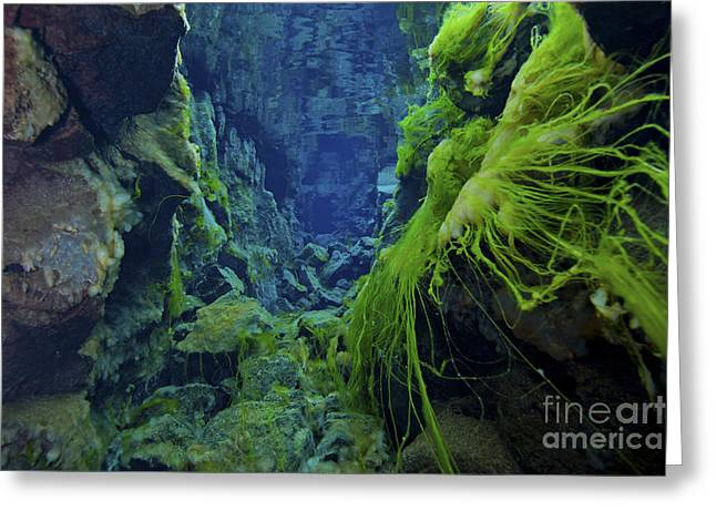 Fluorescent Yellow Greeting Cards - Dramatic Fluorescent Green Algae Greeting Card by Mathieu Meur