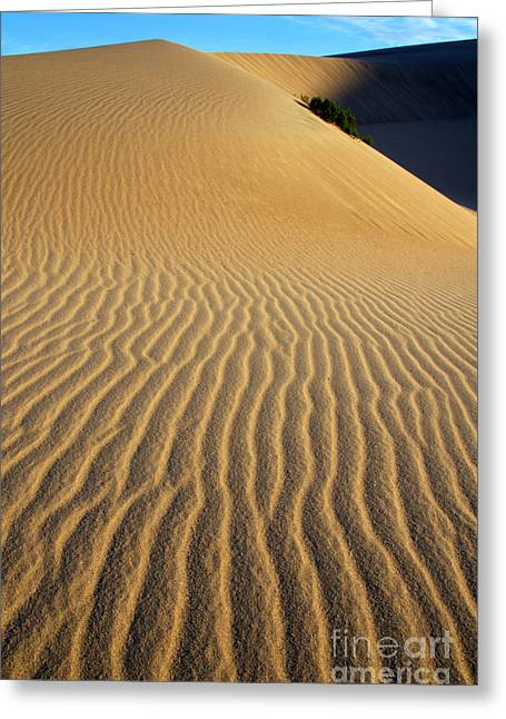 Sand Pattern Greeting Cards - Drawn By The Wind Greeting Card by Bob Christopher