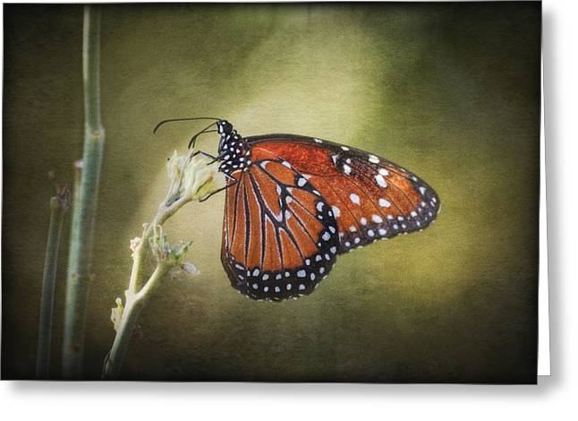Queen Butterfly Greeting Cards - Dream A Little Dream Greeting Card by Saija  Lehtonen