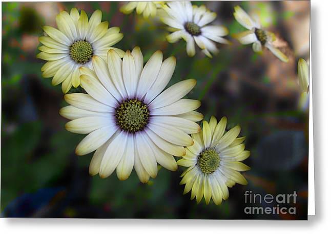 Dream Daisy Greeting Card by Arlene Carmel