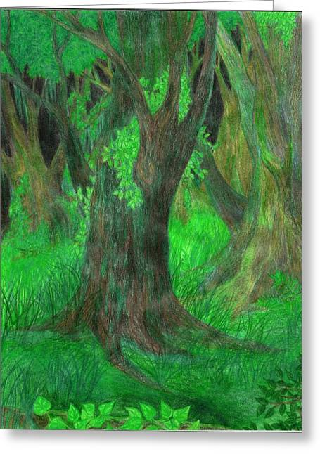 Moss Green Drawings Greeting Cards - Dream Forest Greeting Card by Rebecca Tripp