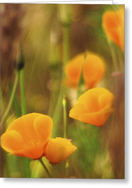 Abstract California Poppies Greeting Cards - Dream Poppies Greeting Card by Ralph Vazquez