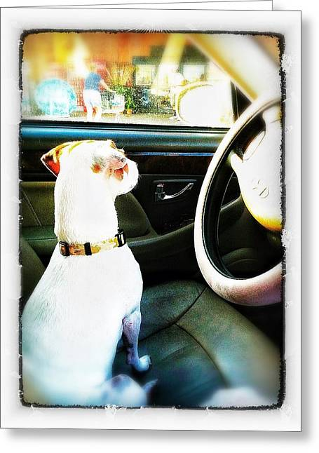 Lucky Dogs Greeting Cards - Dream Ride Greeting Card by Falcon T Solus