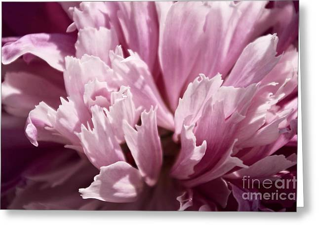 Makro Greeting Cards - Dreaming Greeting Card by Angela Doelling AD DESIGN Photo and PhotoArt