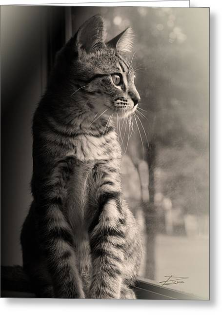 Cat Picture Greeting Cards - Dreaming Greeting Card by Barbara  White