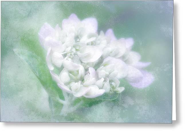 Dreaming Floral Greeting Card by Brenda Bryant