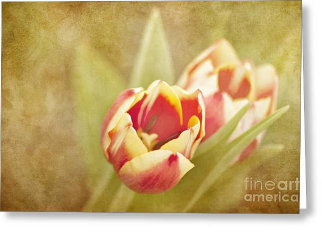 Dreaming Of Spring Greeting Card by Cheryl Davis