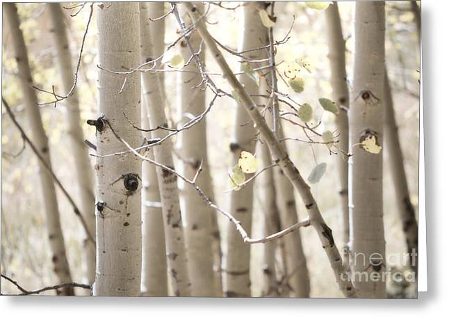 Fine Art Photography Print Greeting Cards - Dreamy Aspen Woodland Greeting Card by Andrea Hazel Ihlefeld