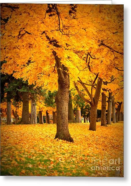 Spokane Greeting Cards - Dreamy Autumn Day Greeting Card by Carol Groenen