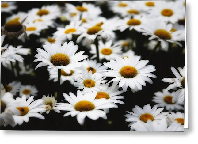 Bellis Greeting Cards - Dreamy Daisies Greeting Card by George Oze