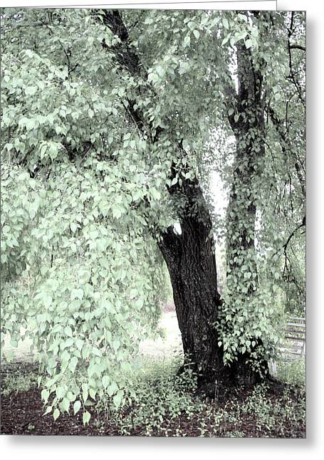 Tree Photography Greeting Cards - Dreamy Mint Green Surreal South Carolina Tree Greeting Card by Kathy Fornal