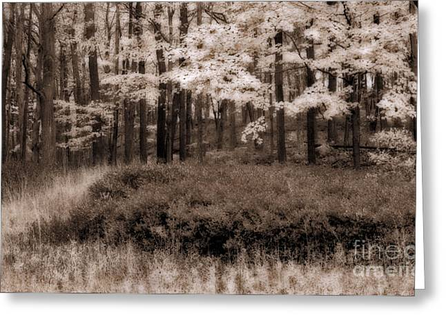 Foliage Greeting Cards - Dreamy Woods Greeting Card by Susan Candelario
