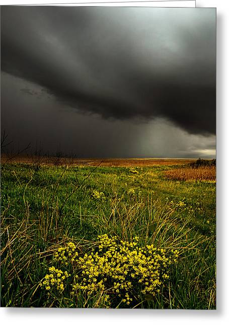 Geographic Greeting Cards - Dreary Days Greeting Card by Phil Koch