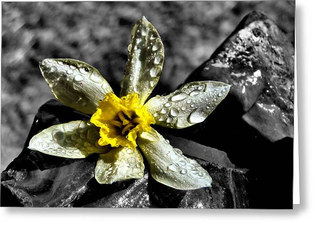 Drenched in Light Greeting Card by Karen M Scovill