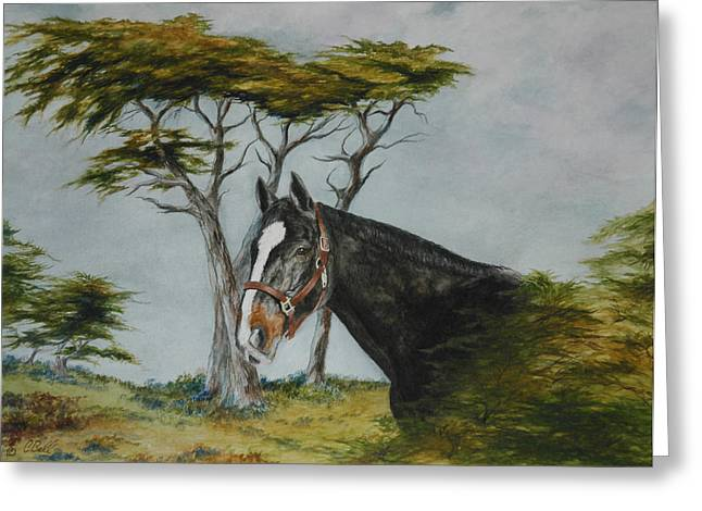 Oldenburg Greeting Cards - Dressage Horse in Pebble Beach Greeting Card by Candace Bell