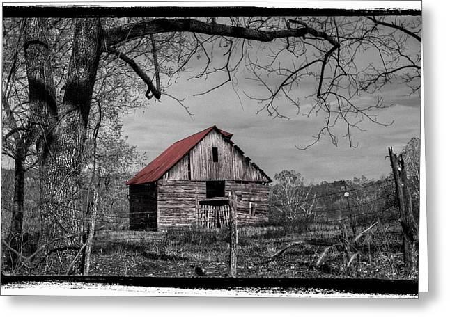 Best Sellers -  - Tennessee Farm Greeting Cards - Dressed In Red Greeting Card by Debra and Dave Vanderlaan