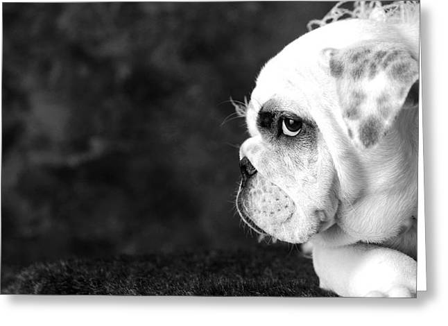 Monochrome Greeting Cards - Dressed Up Dog Greeting Card by Sumit Mehndiratta