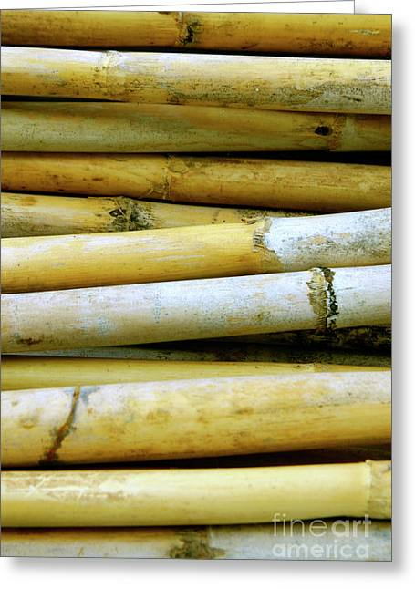 Bamboo Wall Greeting Cards - Dried Canes Greeting Card by Carlos Caetano