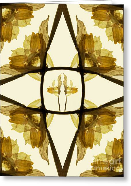 Dried Daffodil Composition Greeting Card by Janeen Wassink Searles