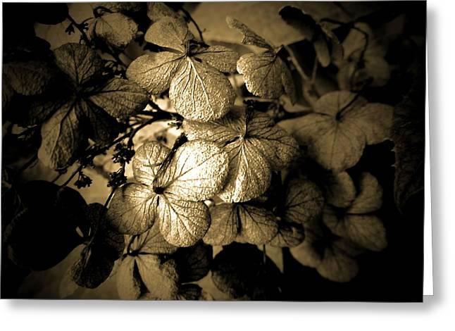 Dried Hydrangeas Greeting Cards - Dried Hydrangea Greeting Card by Beth Akerman