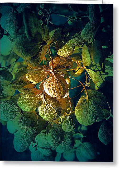 Dried Hydrangeas Greeting Cards - Dried Hydrangea in Green Light Greeting Card by Beth Akerman