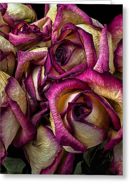 Dried Pink And White Roses Greeting Card by Garry Gay