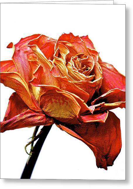Dried Rose Greeting Card by Bernard Jaubert