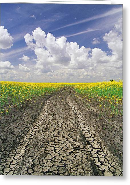 Jul08 Greeting Cards - Dried Up Machinery Tracks Greeting Card by Dave Reede