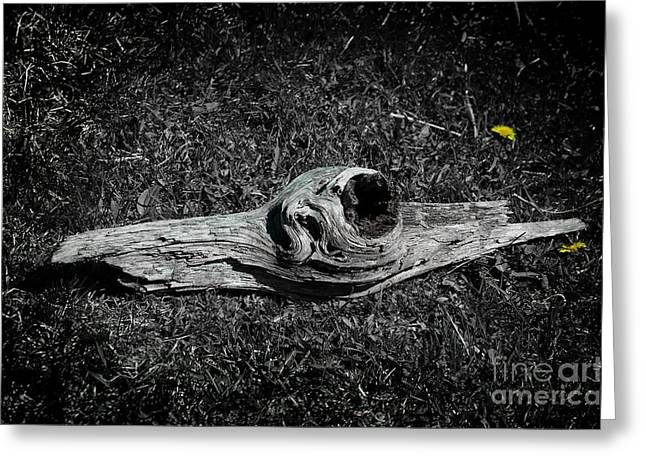 Drift Wood Greeting Cards - Drift Greeting Card by The Stone Age