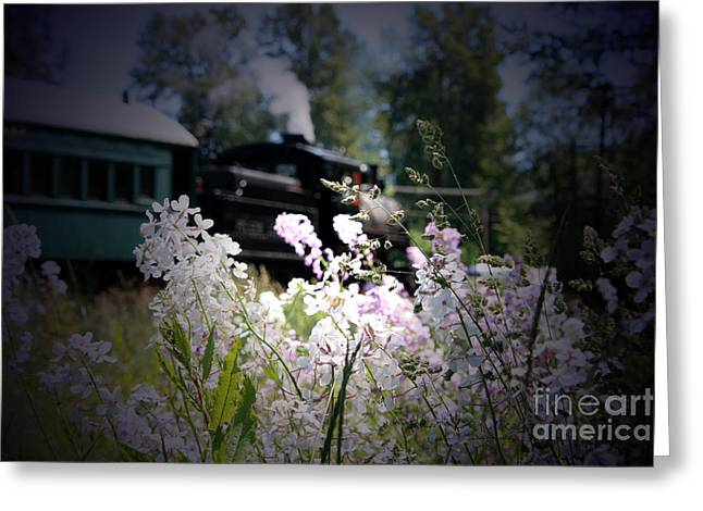 Drifter Photographs Greeting Cards - Drifters Dream Greeting Card by C E Dyer