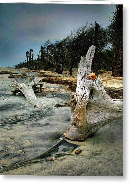 South Beach Framed Prints Greeting Cards - Driftwood and Beach Greeting Card by Steven Ainsworth